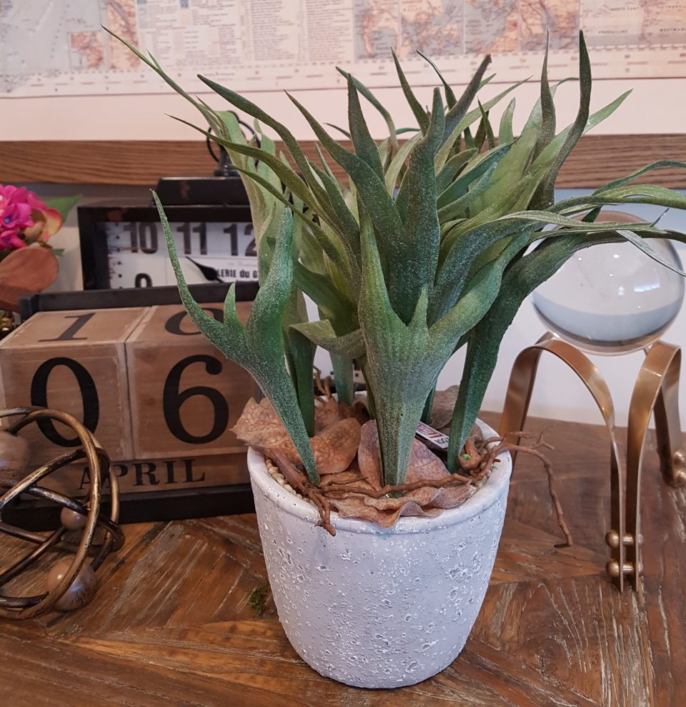 artificial-staghorn-fern-cement-pot