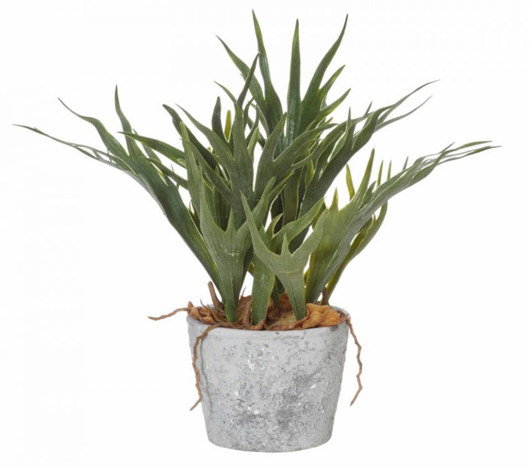 Staghorn-fern-cement-pot-38cm