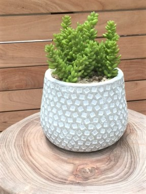 handmade patterned concrete plant pot succulent